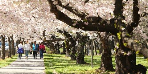 Spring in Christchurch CCC - 16 - LH  (4).jpg