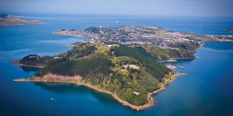 Trees that Count Display Miramar Peninsula Aerial iStock-134056256.jpg